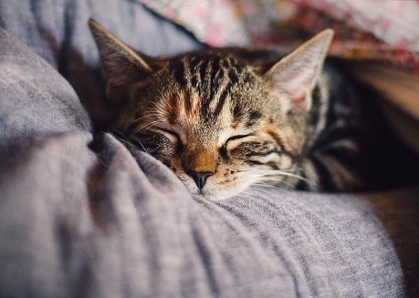 Các yếu tố về giấc ngủ ảnh đại diện