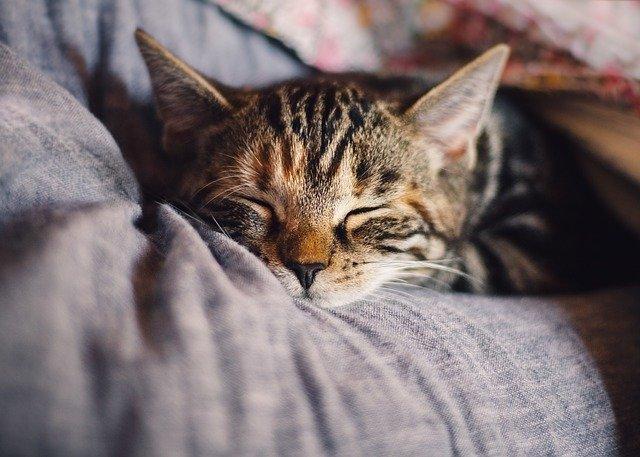 Giấc ngủ ban đêm rất quan trọng đối với tất cả mọi người!